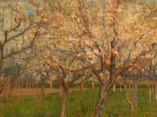"""The Pink Orchard"""